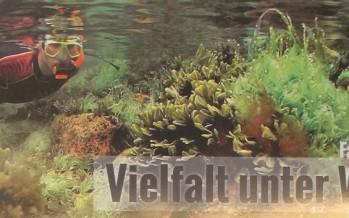 Hingucker – Wie eine Infotafel für den Schutz der Ostsee sorgen soll