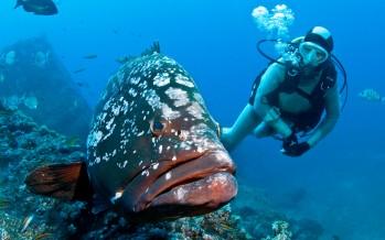 Manta Diving Center Madeira vermittelt jetzt auch Appartements