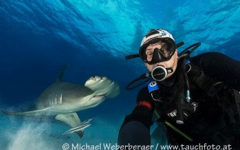 Unterwasserfotograf Michael Weberberger ist fasziniert von Haien
