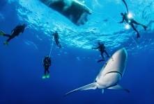 Unterwasserfotograf Michael Weberberger zeigt seine Bilder