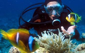 Neue Studie – Taucher stören die Ruhe von Fischen an Korallenriffen