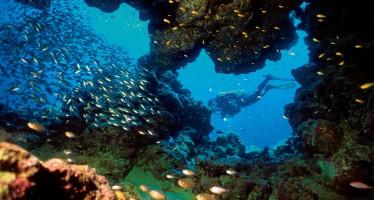 Tauchexpedition im Sudan – Auf den Spuren von Hans Hass und Cousteau