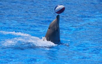 """""""Eine schlechte Idee!"""" – Meeresschützer kritisieren Delfintherapie"""