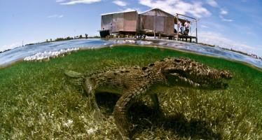 Tauch-Expedition nach Mexiko zeigt Höhepunkte der Yucatan-Halbinsel