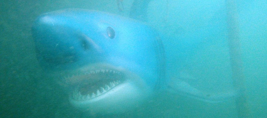 """Attersee-Hai """"Sparky"""" bekommt eine neue Heimat im Freibacher Stausee in Kärnten"""