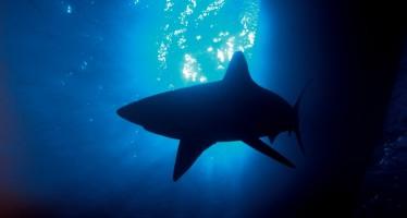 Aus der Praxis – Zehn Tipps für das Schnorcheln mit Haien
