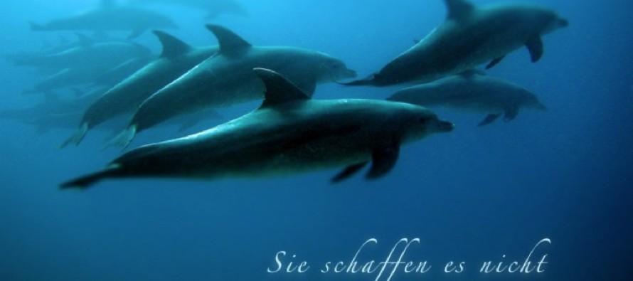 Tauchbasen veröffentlichen gemeinsam Song für Delfinschutz