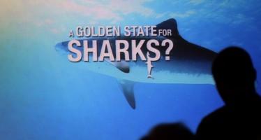 Shark Savers – Applaus für Haischutz-Doku bei Weltpremiere