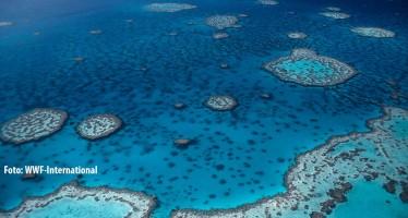 Aufatmen in Australien – Great Barrier Reef vorerst nicht auf Roter Liste