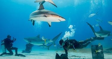Die Sharkschool zieht um – Neues Hauptquartier ab dem Jahr 2016