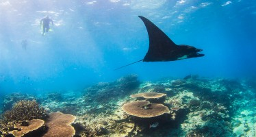 Queensland – Am Great Barrier Reef in Australien mit Mantarochen tauchen