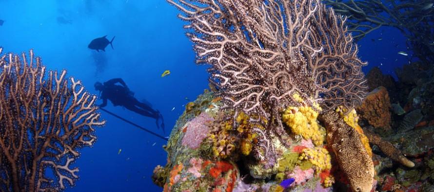 Tauchen in der Karibik – die Traumziele Bonaire und Curaçao im Blick