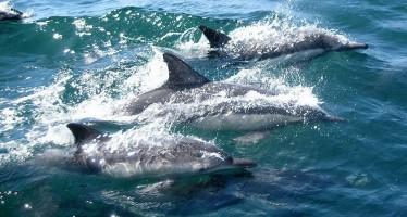Viele Erfolge – Delfinschützer stellen neuen Jahresbericht vor