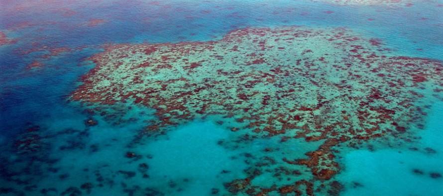 Greenpeace will Great Barrier Reef vor Kohleindustrie schützen