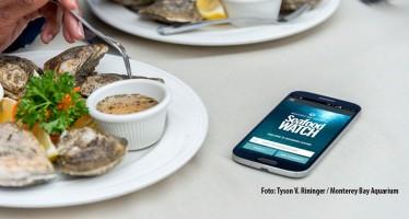 """""""Seafood Watch""""-App – Welchen Fisch kann man noch bedenkenlos essen?"""