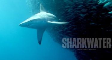 Haischutz-Dokumentation Sharkwater gratis bei Youtube sehen