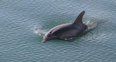 Delfinschutz – Zentrum lädt Kroatien-Urlauber zum Besuch ein