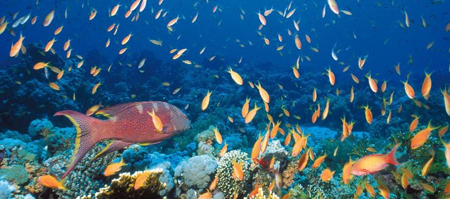 Diese fünf Faktoren entscheiden, ob Korallen überleben – oder nicht