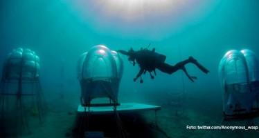 Taucher in Italien züchten Basilikum in Plantagen auf dem Meeresboden