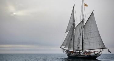 Segelschiff Opal – Wale gucken und dabei die Umwelt schonen