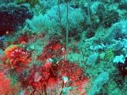 Forscher entdecken zweites Great Barrier Reef in Australien