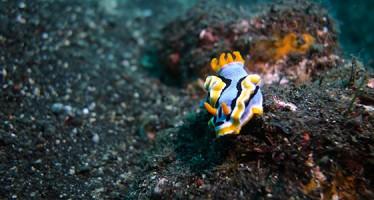 diving.DE eröffnet Tauchbasis auf Bali im September