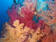 Schutzraum für Korallen