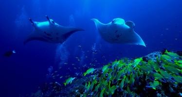 COOEE OBLU – Atmosphere und DER Touristik launchen Tauchresort