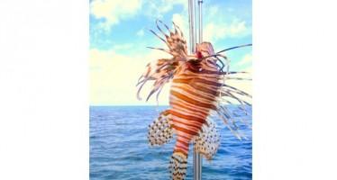 Auf Aruba isst man Feuerfisch