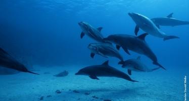 Welthandelsorganisation schwächt Delfinschutz