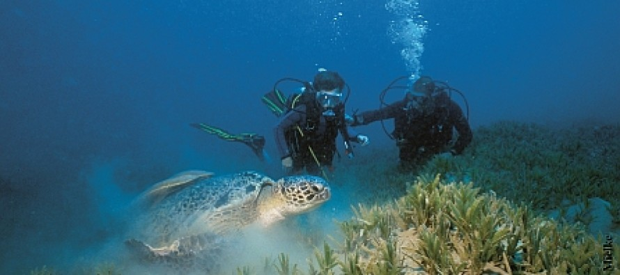 Neu im südlichen Ägypten:  diving.DE Abu Dabab