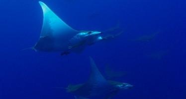 WAHOO Diving jetzt mit Nitrox