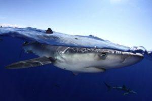 Fotos: Nuno Sa für Pico Sport Azoren