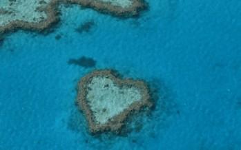 Korallenbleiche in Australien verschärft sich