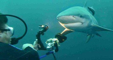 Aqua Active Agency auf Entdeckungsreise in Südafrika