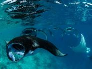 Manta Trust Expedition im September