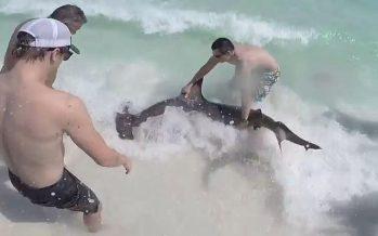 Brüder retten Hammerhai