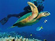 Vamizi – Artenreiches Korallenriff vor Ostafrikas Küste
