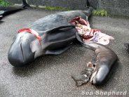 Der Grind – Walfang auf den Faröer