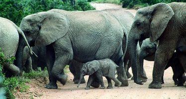 The biggest Animals of Africa  über und unter Wasser