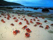 Neu im Angebot von WeDive:  Christmas Island & Tobago