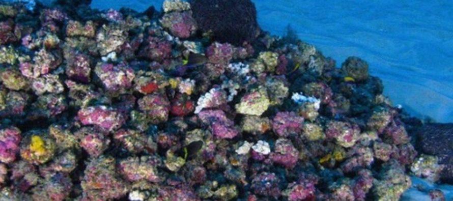 Amazonas Riff – Sensationsfund