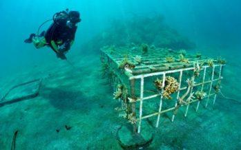 Korallenriffe aus einer Koralle wieder herstellen