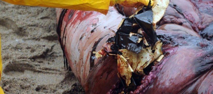 Wal bei Bergen getötet