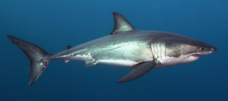 Shark Night 2017