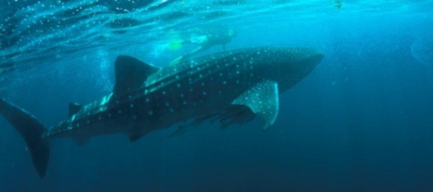 Ab auf die Malediven mit WeDive Travel AG