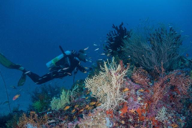 Meeresbiologie
