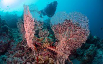 Einmal im Leben Meeresbiologe sein