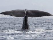 Wale erleichtert