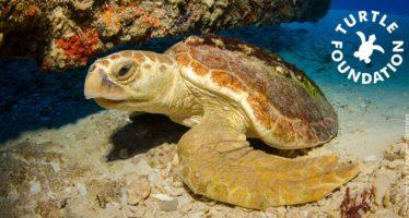 Große Verlosungsaktion der Turtle Foundation für Meeresschildkröten jährt sich zum 10. Mal!